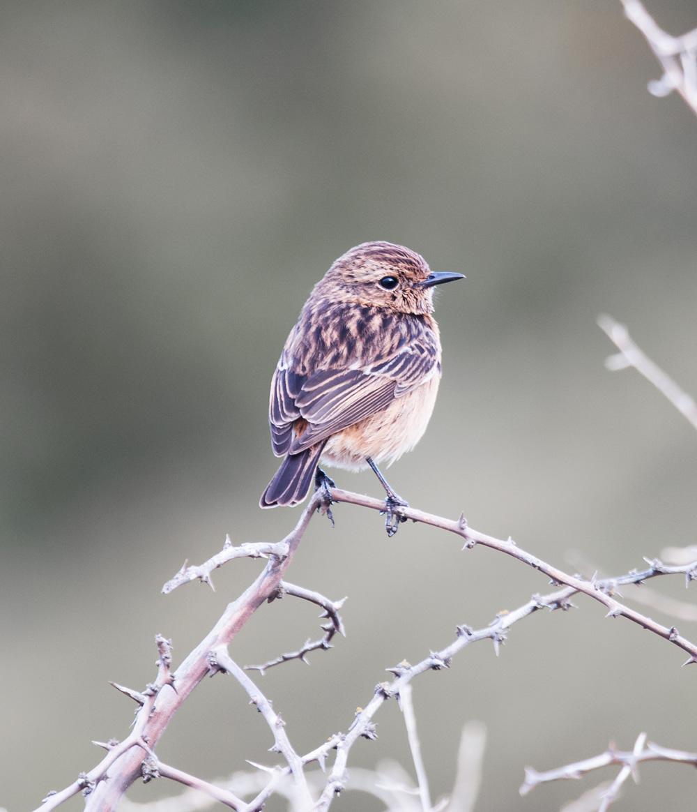 Algarve Lagos birdwatching