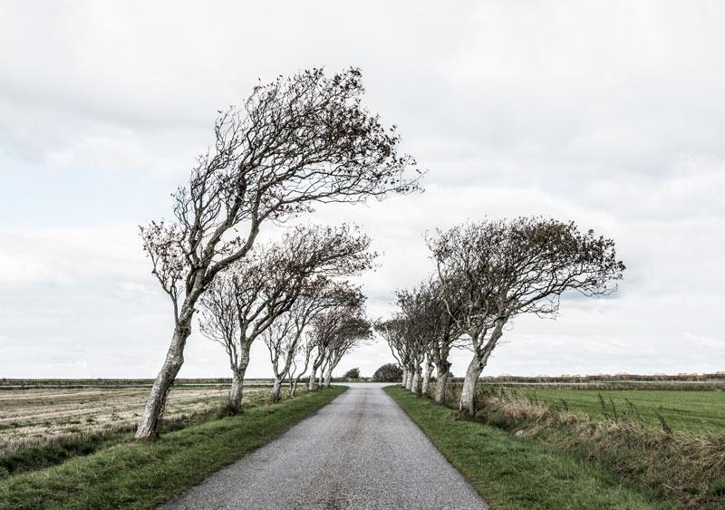 Sort Sol-safari på egen hånd i Sønderjylland