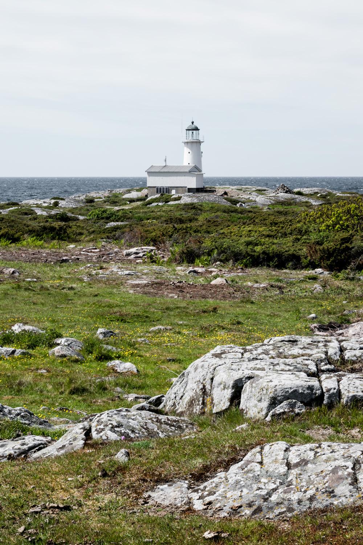 Hallands Väderö Sweden - razorbills, seals and swedish archipelago