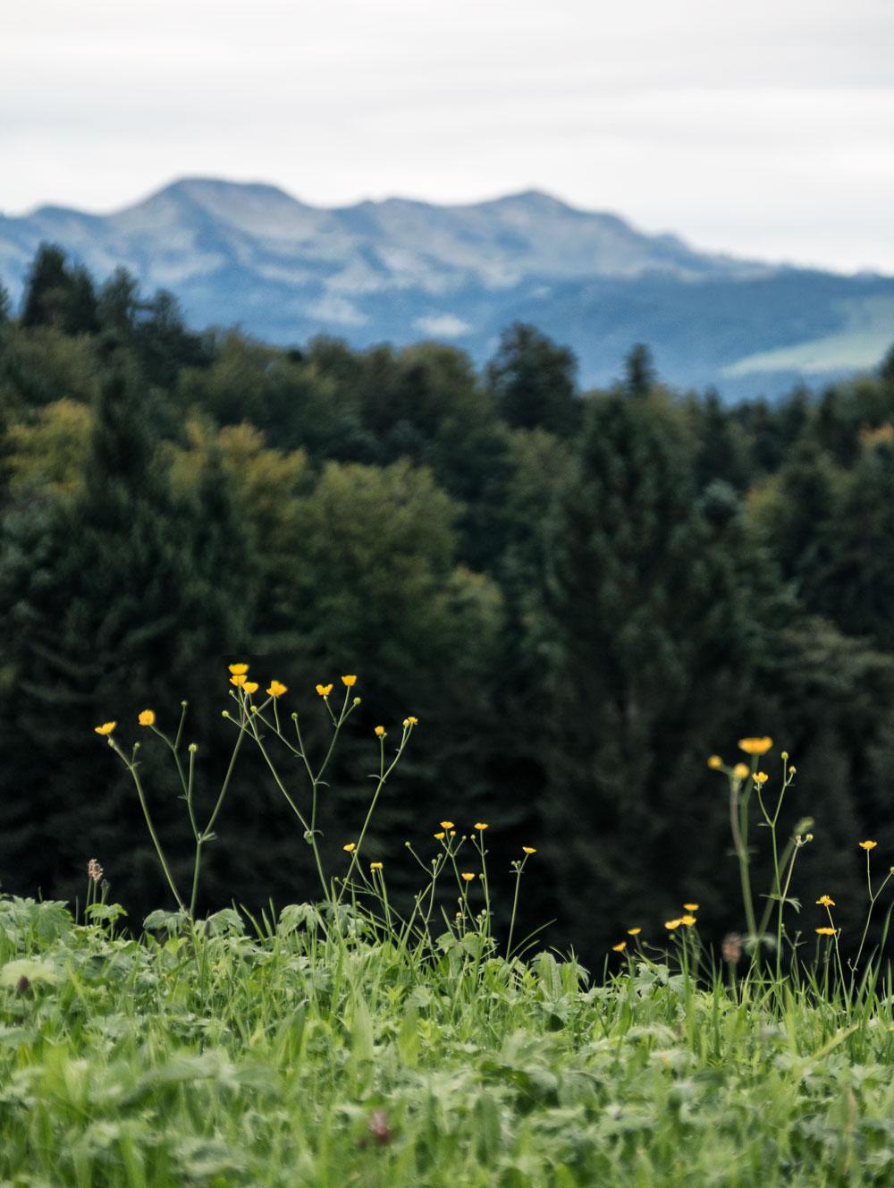 Mose vandring i Østrig / Walking the moors of Krumbach in Austria