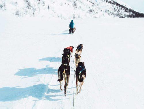 hundeslæde Hovden Norge