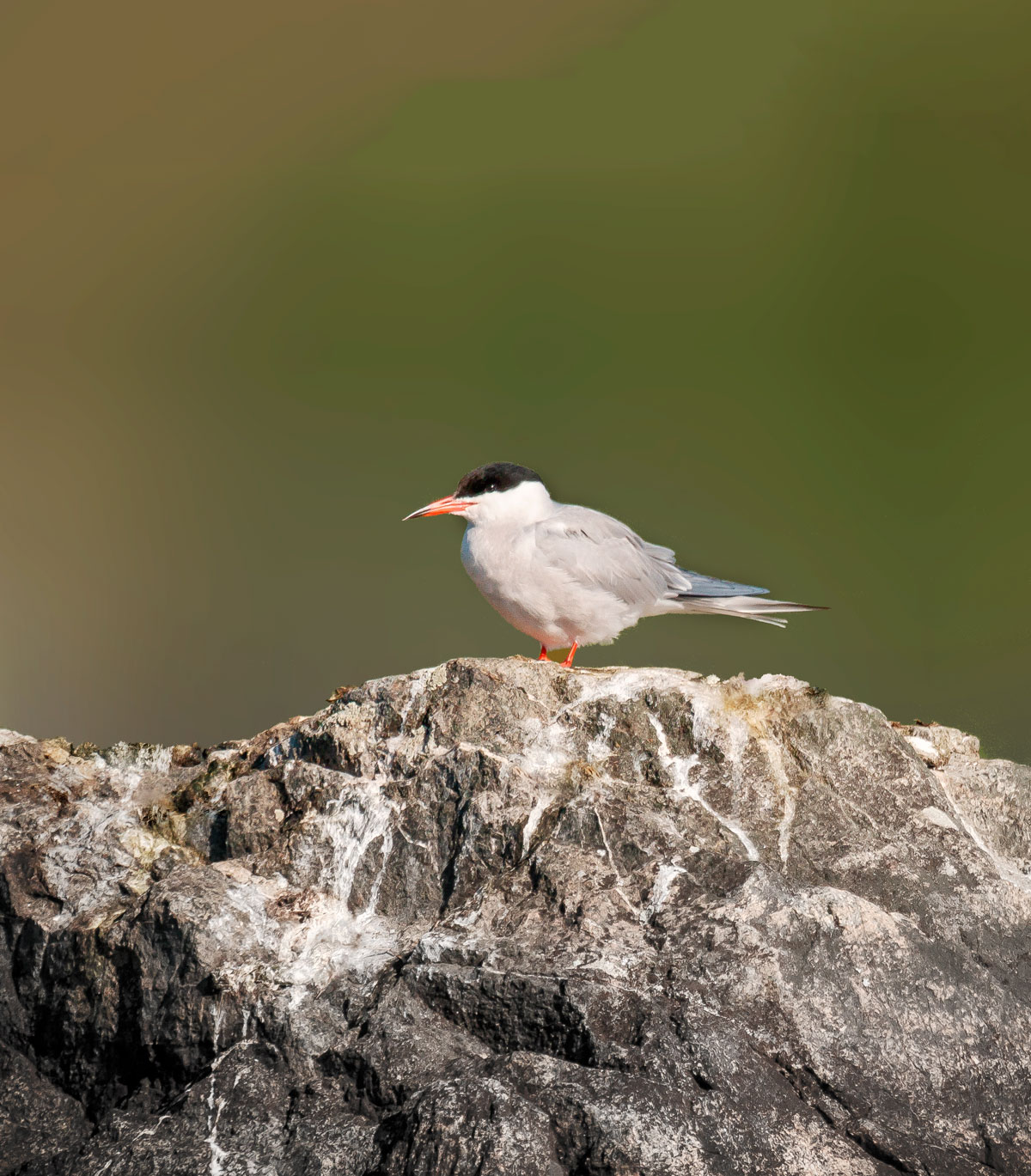 A stay in Småland Sweden on our very own island tern