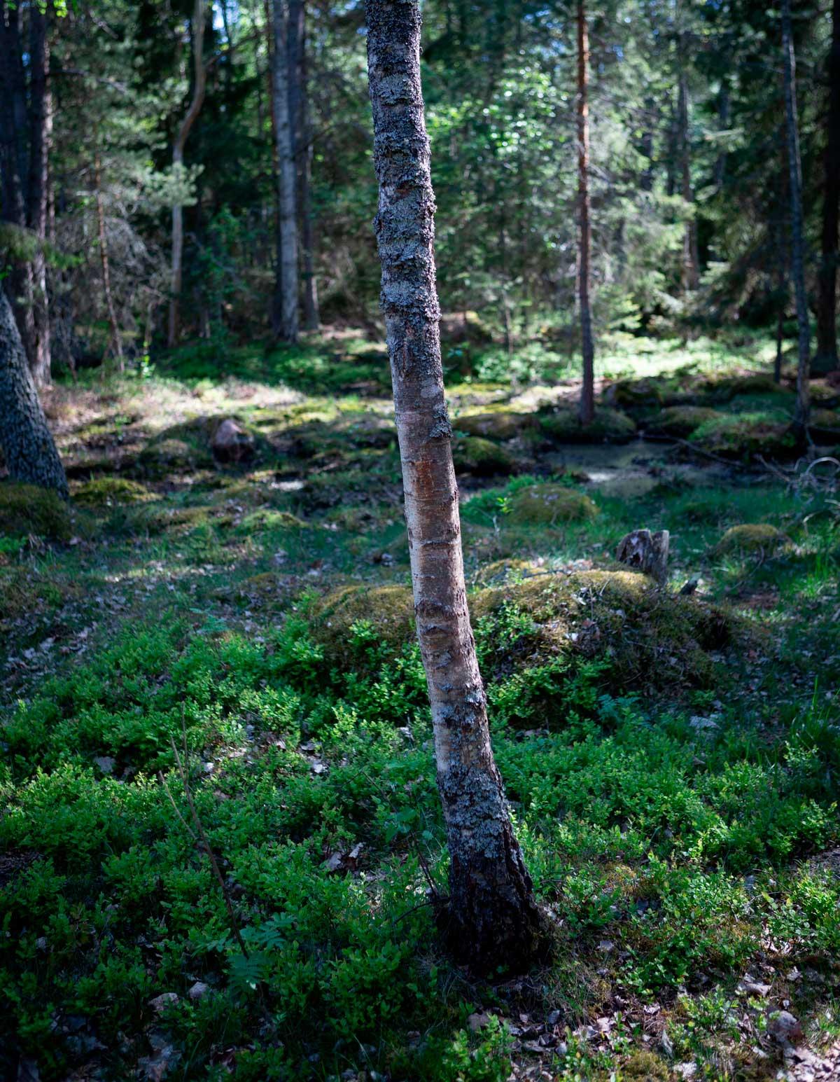Västerviks Skærgård i Småland - Hasselö