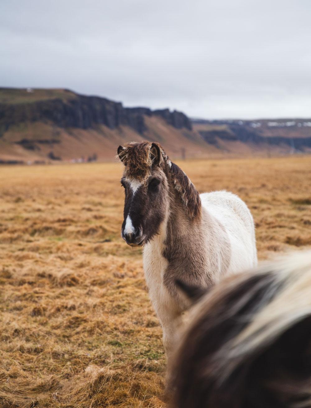 Seværdigheder på Island om vinteren - vandfald, varme kilder og ishuler