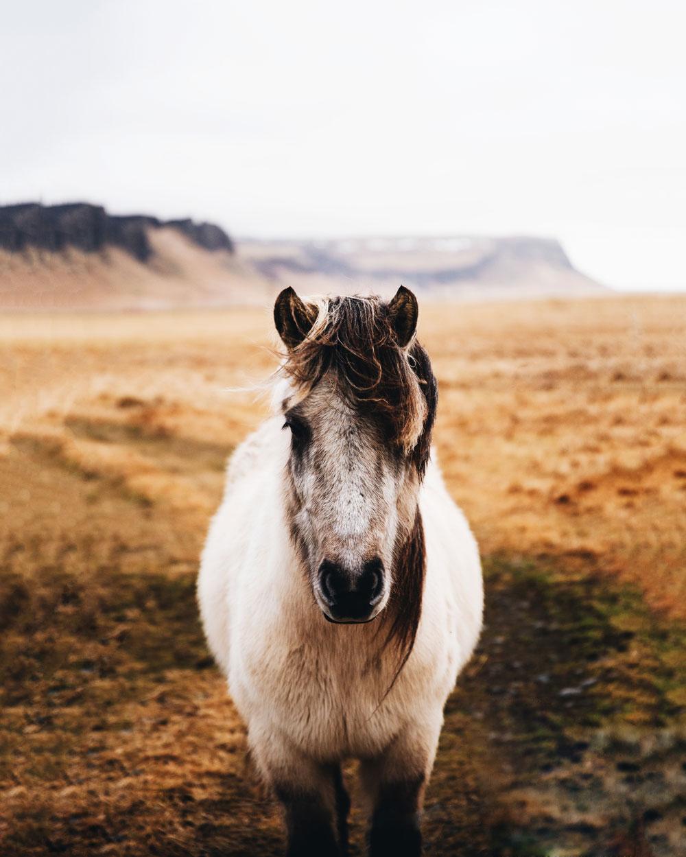 Seværdigheder på Island om vinteren - nordlys, varme kilder og ishuler
