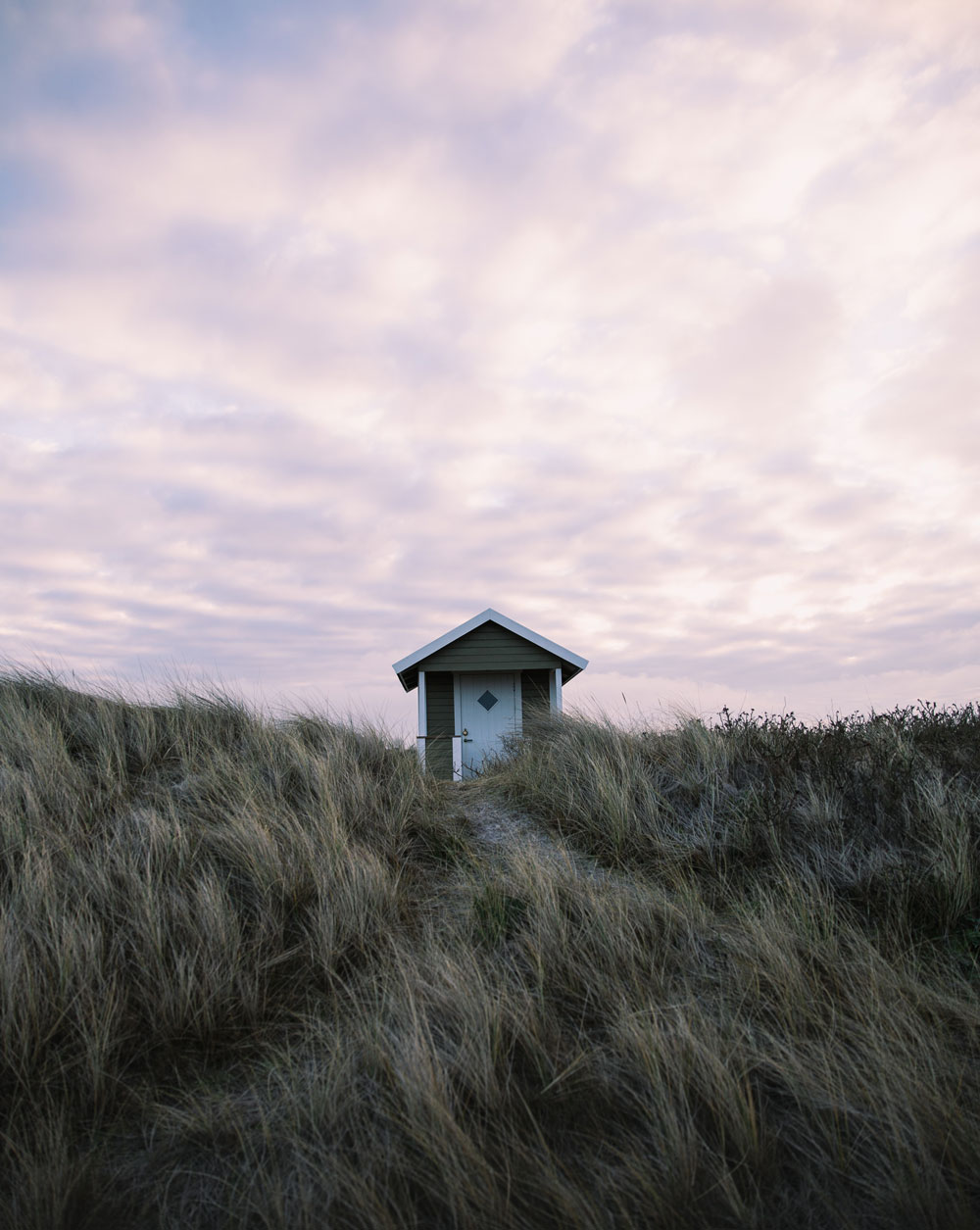 Falsterbo: Sæler i naturreservatet Måkläppen
