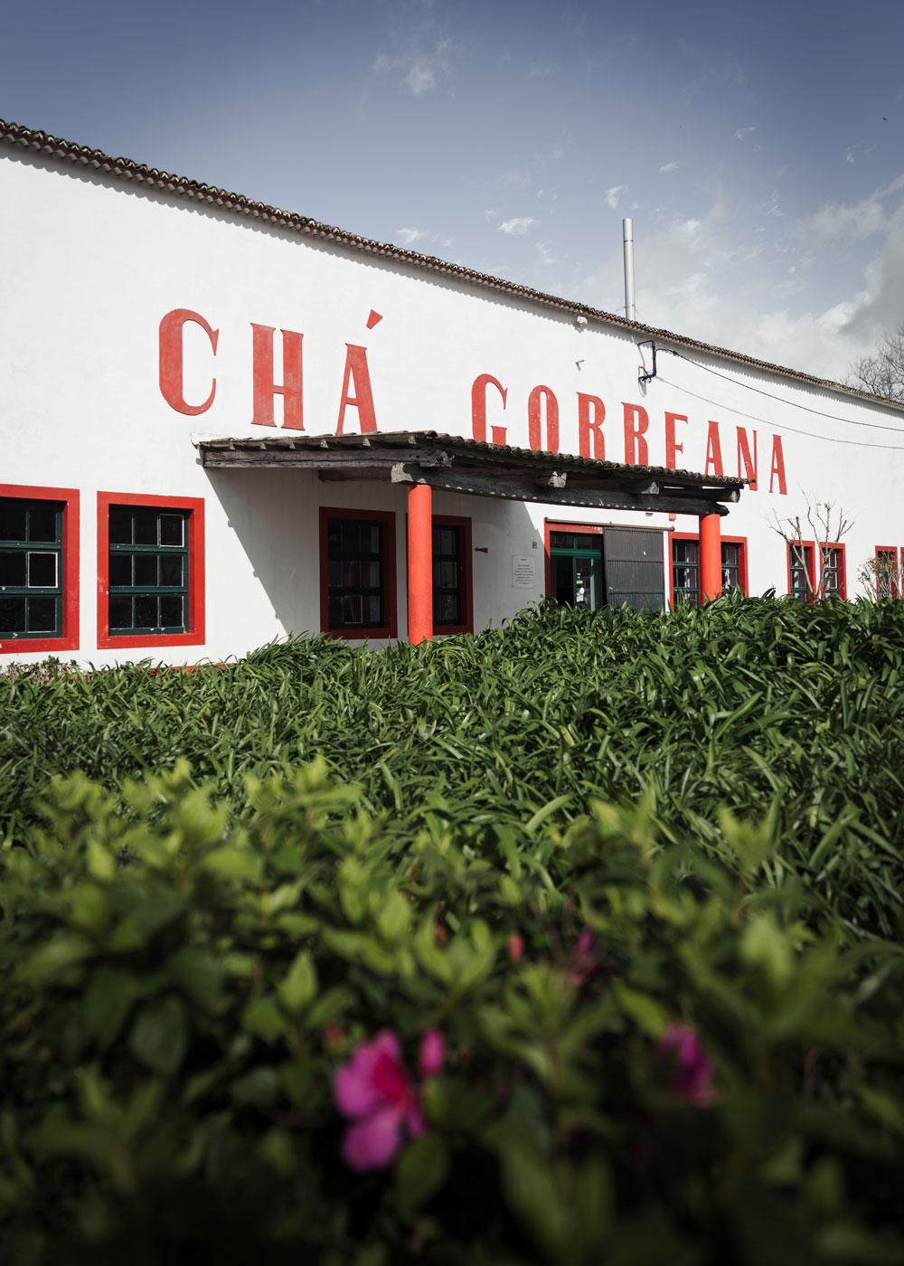 The Tea Plantation Cha Gorreana