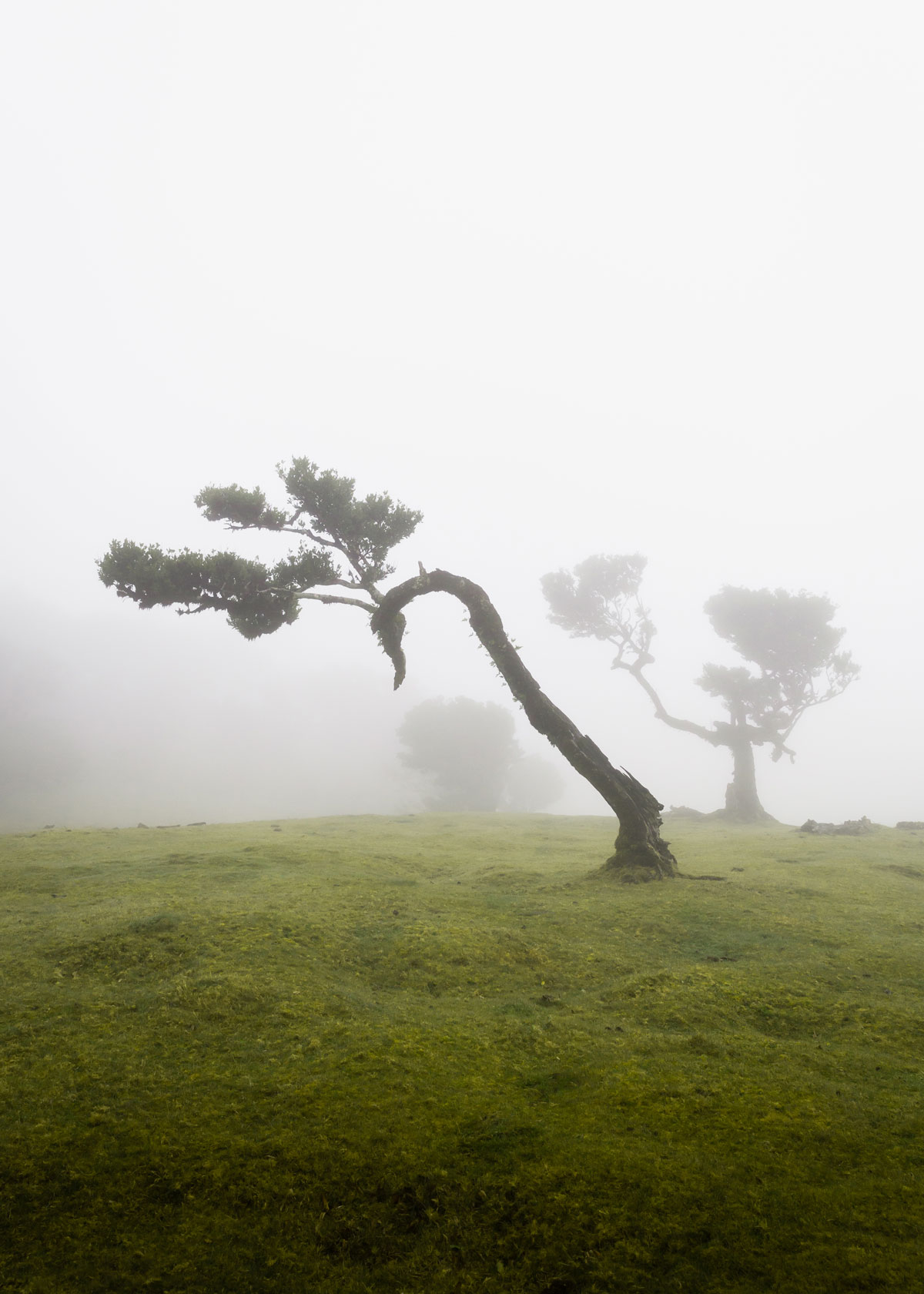 Fanal Madeira: The ancient Laurisilva forest