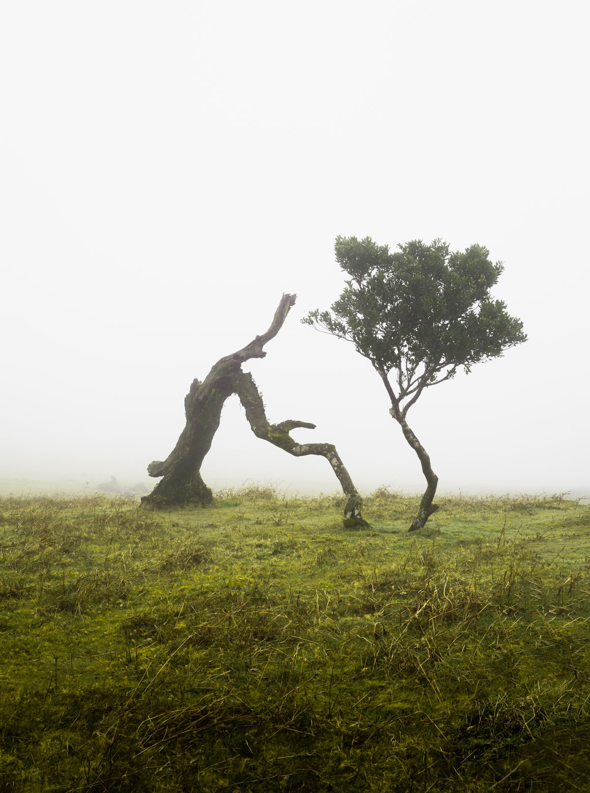 Madeira guide / Skoven Fanal