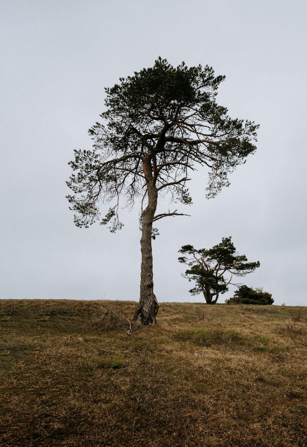 Vandretur på Sjælland: Tibirke Bakker