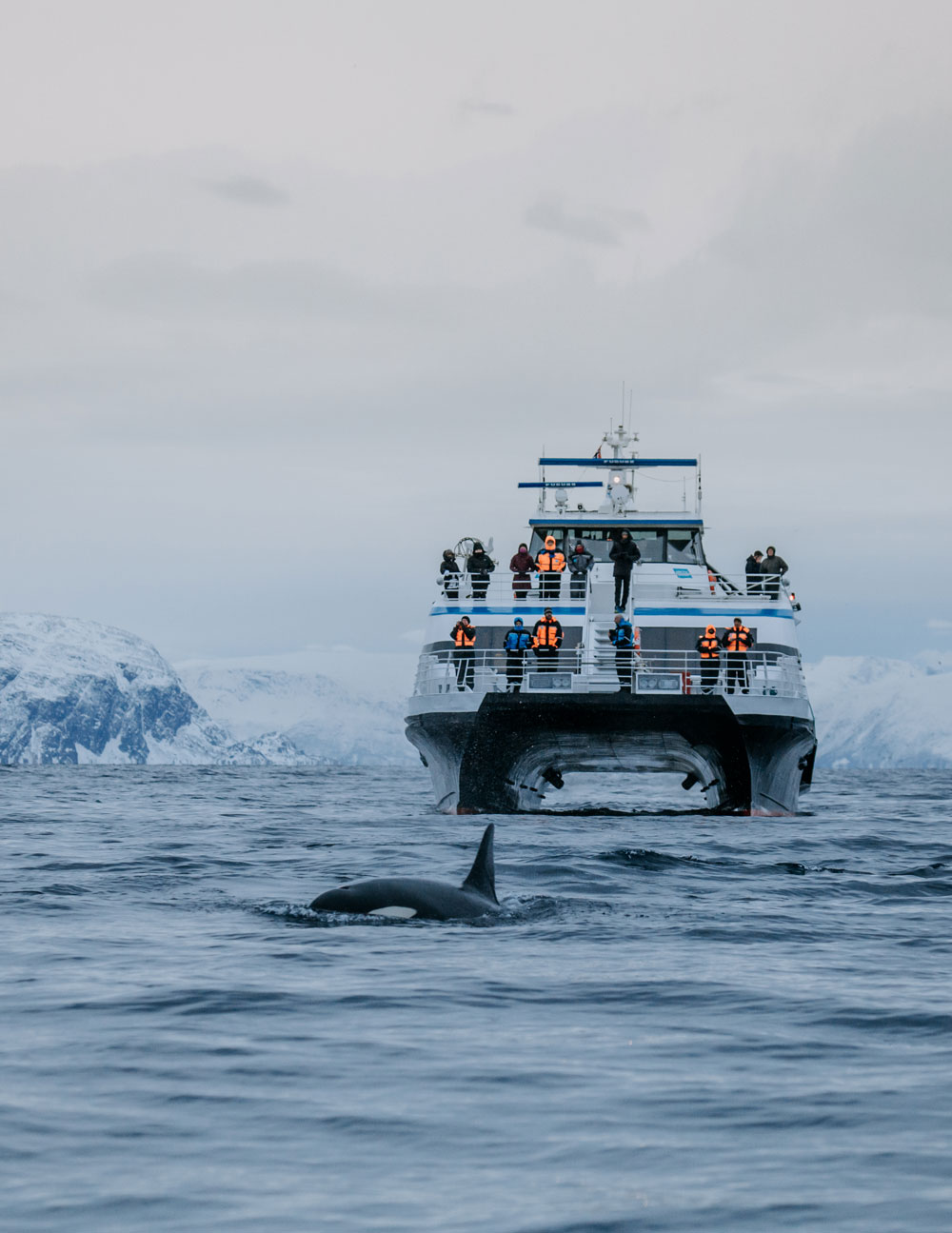 Arctic Expedition catamaran