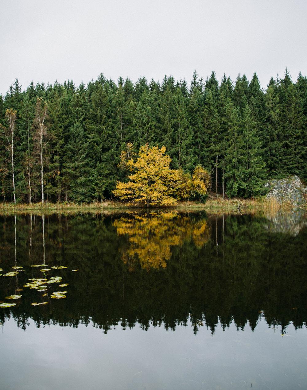 Rø Plantage