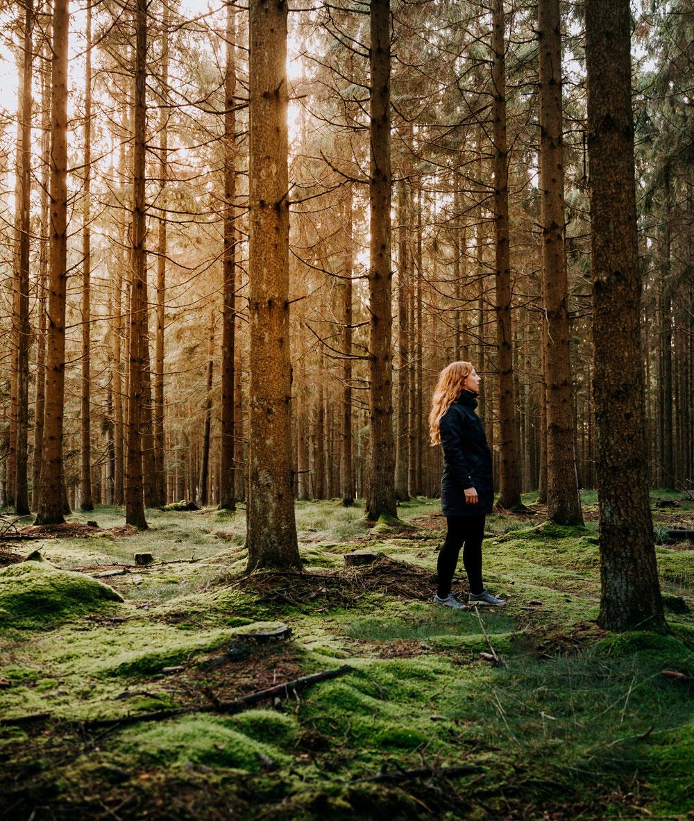Skovmagi i Almindingen på Bornholm
