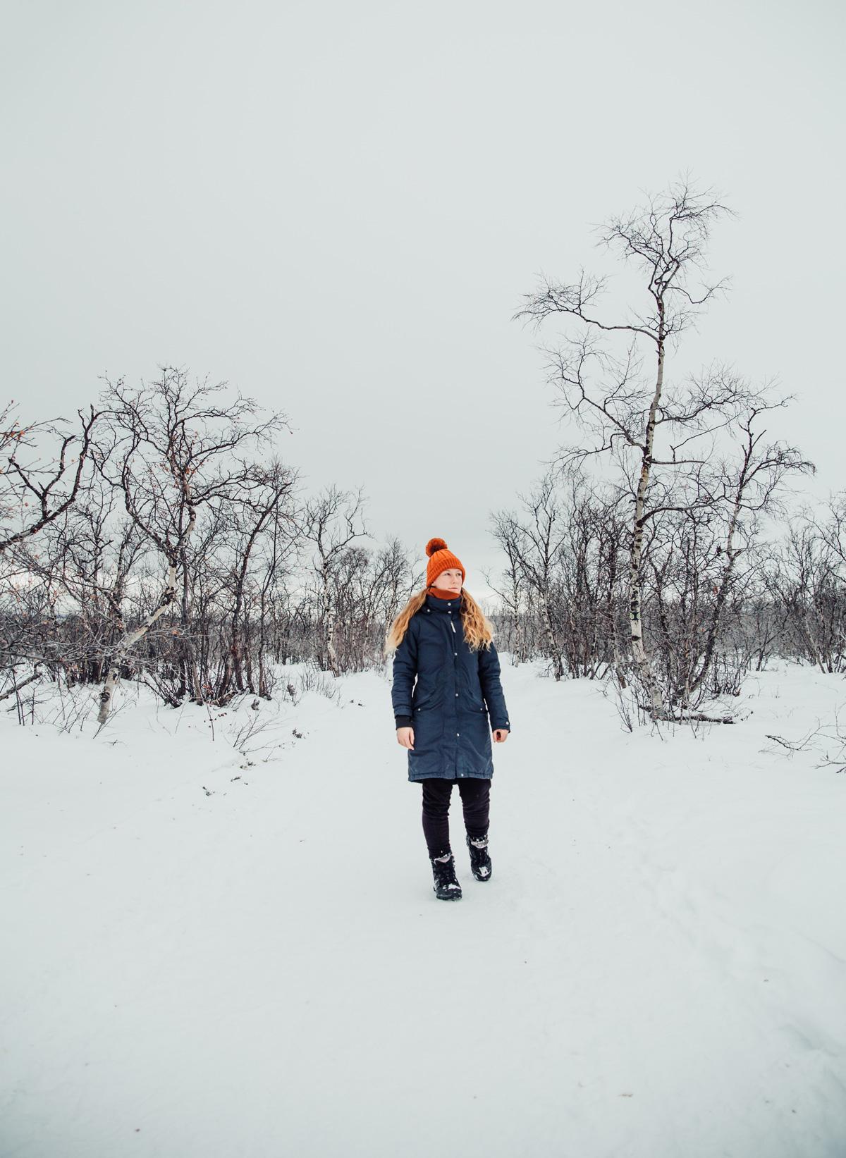 Vinter i Abisko Nationalpark
