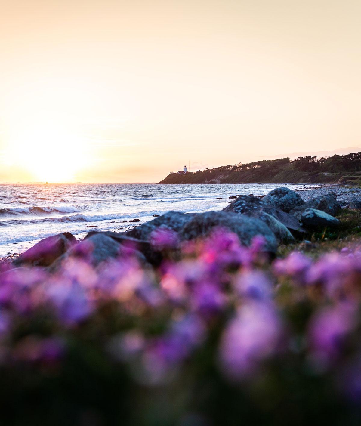 Seks flotte naturoplevelser på Sjælland / Røsnæs