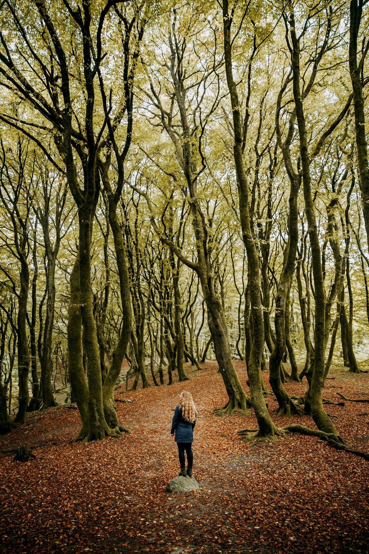 Troldeskoven i Rold Skov