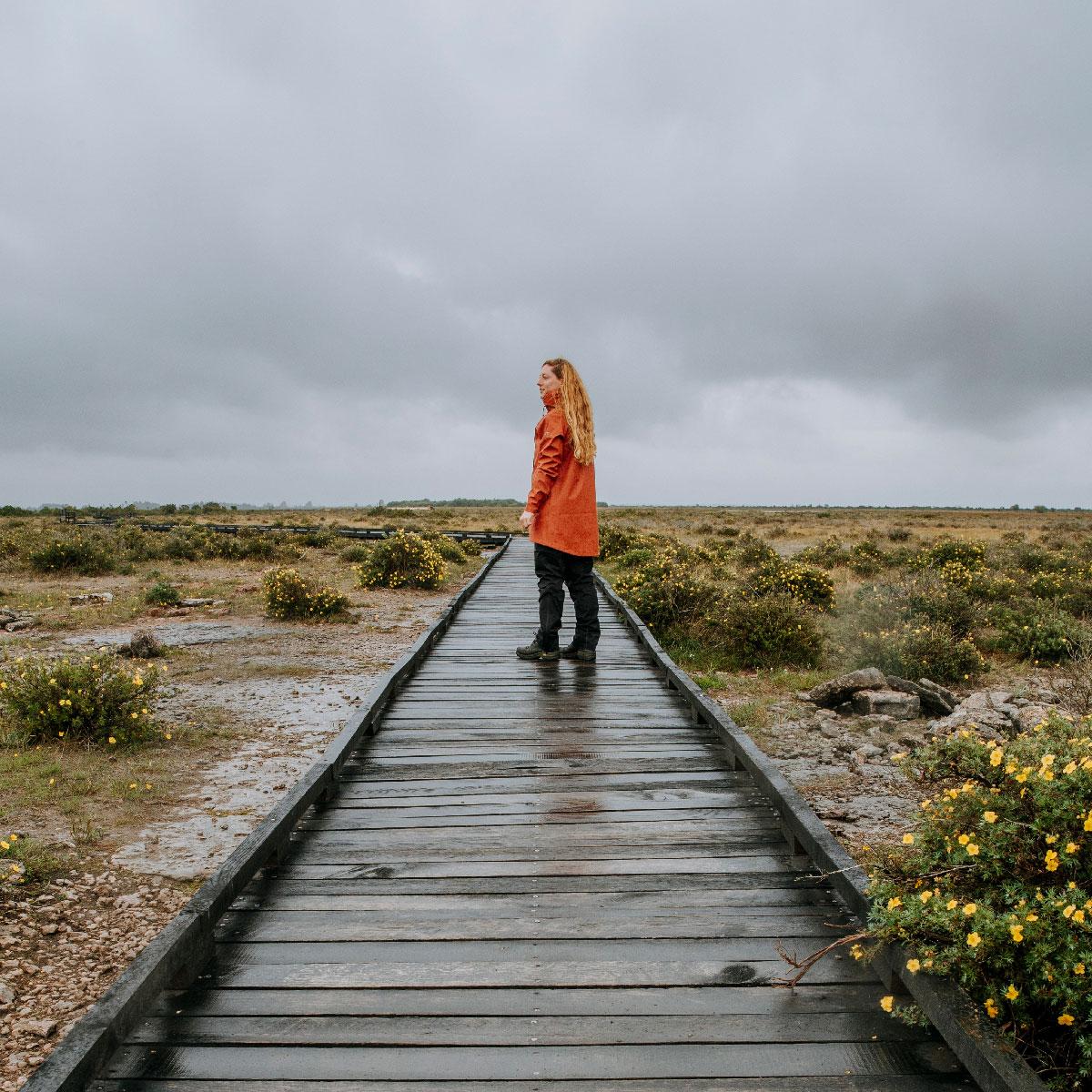 Alvaret ved Möckelmossen på Öland
